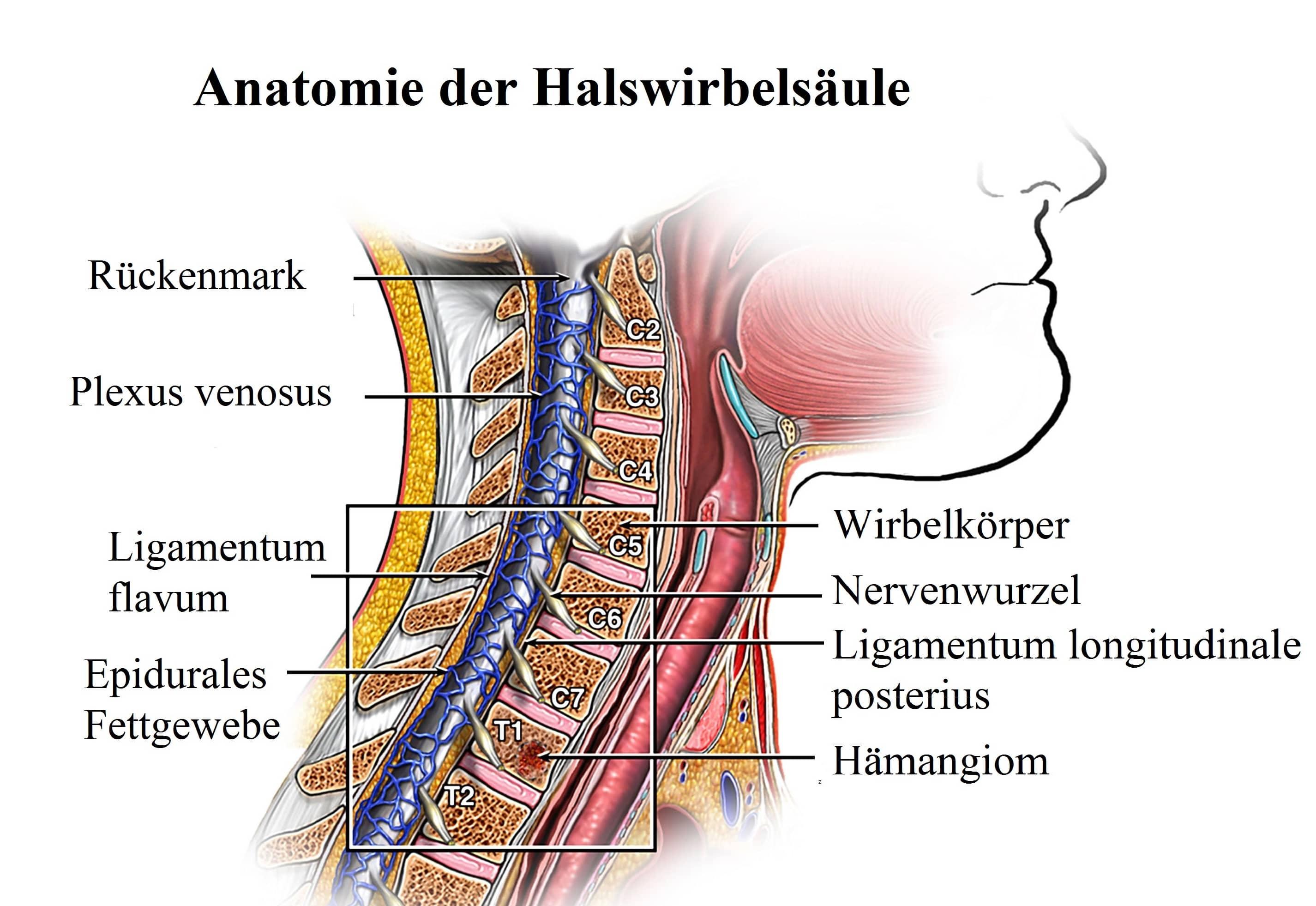 Anatomie der Wirbelsäule, Schmerzen, Bilder, Aufbau, Knacken