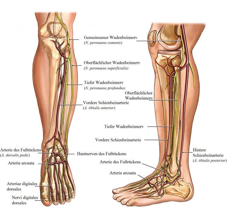 Tolle Knochen Im Bein Anatomie Fotos - Menschliche Anatomie Bilder ...