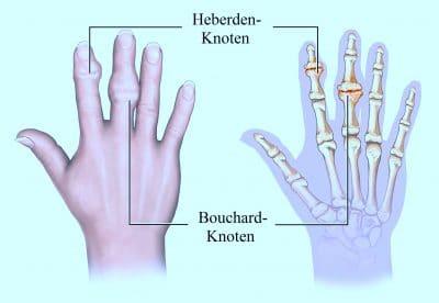 Anatomie des Zeigefingers