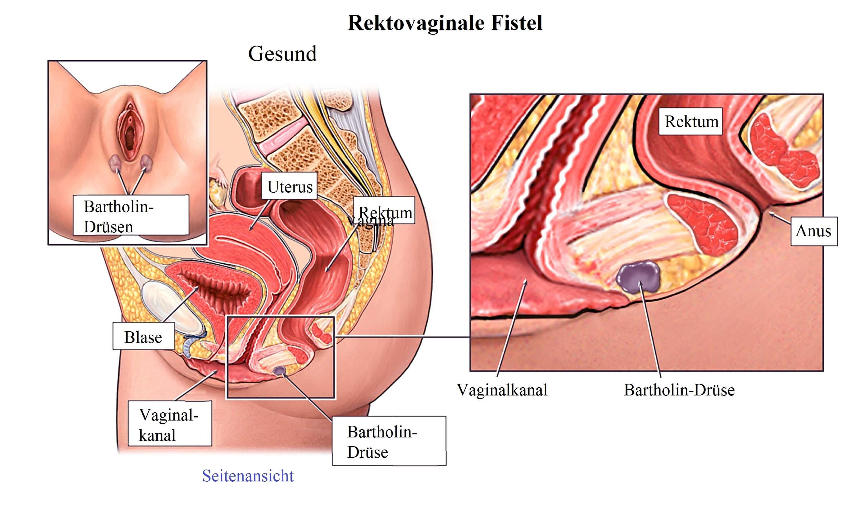 Fein Drüsen Im Mund Anatomie Bilder - Menschliche Anatomie Bilder ...
