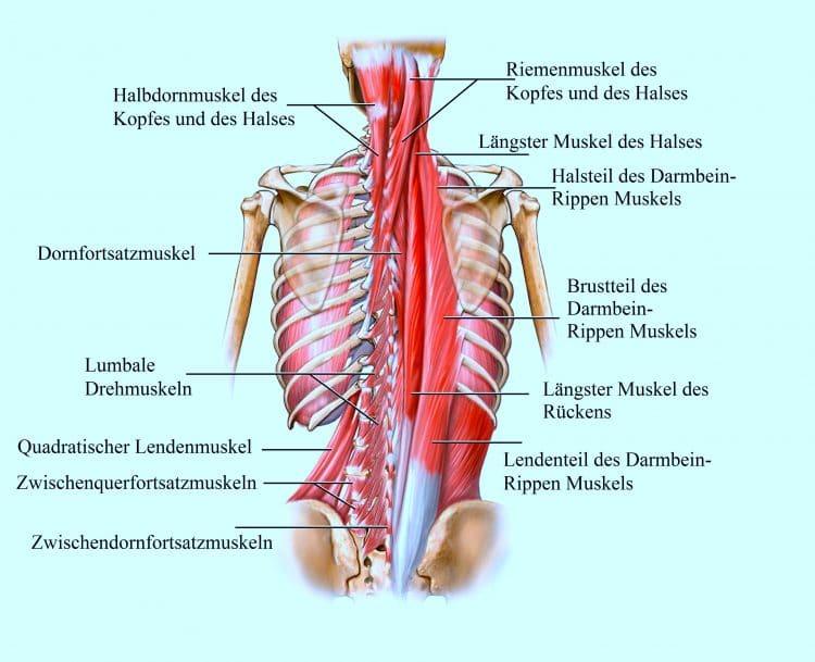 schmerzen über der brust links
