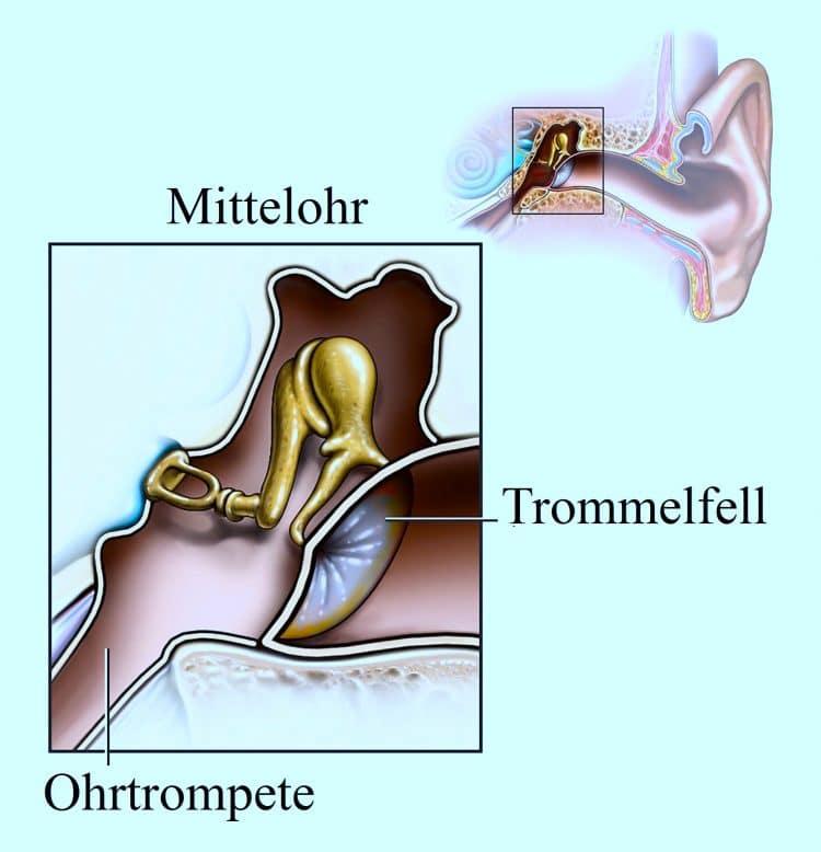 Mittelohr, Infektion, Trommelfell, Ohrtrompete
