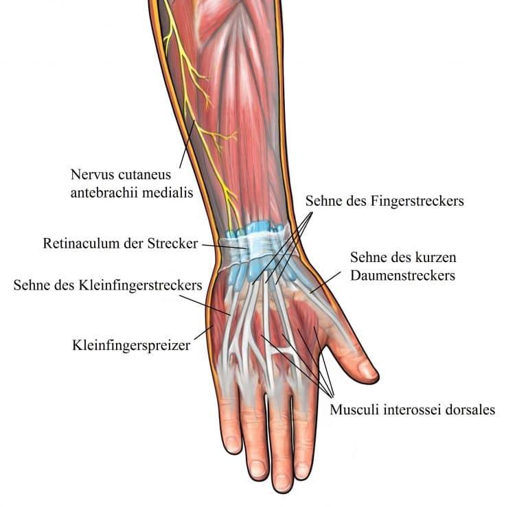 Traumatische Fingerverletzungen, Kapselriss, Sehne, Behandlung ...
