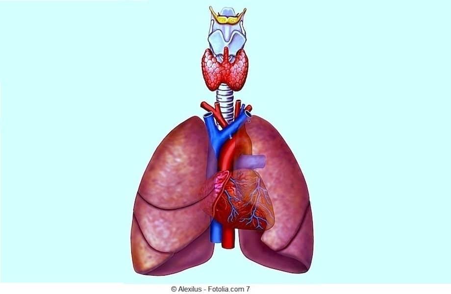 Brustschmerz, Thoraxschmerz, Herzinfarkt, Angina pectoris, Erkältung