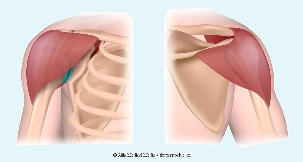 Anatomie der Schulter