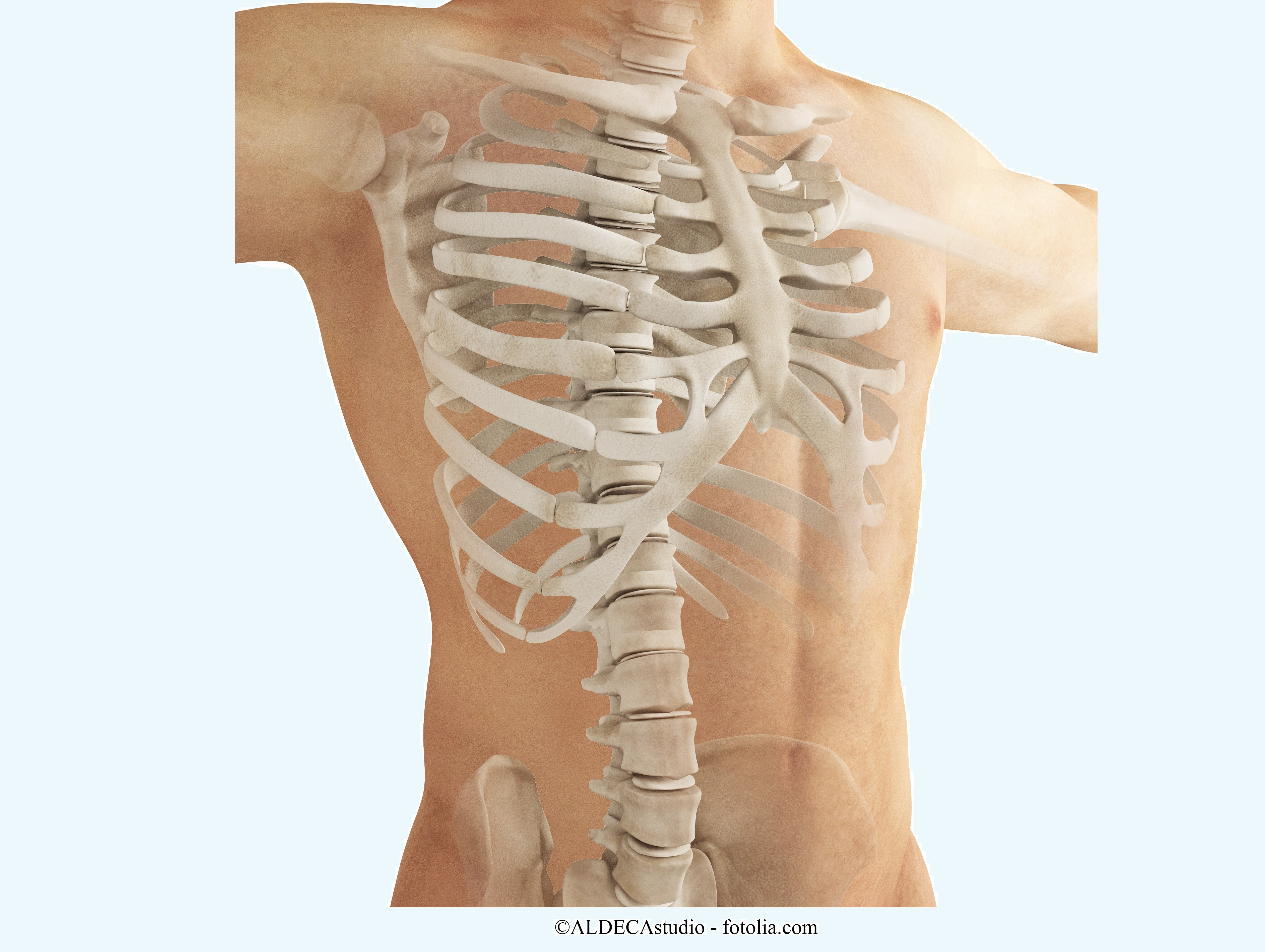 Knochenmetastasen
